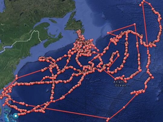 Lydia, a mature great white shark, has traveled 35,028 miles since being tagged in March 2013. (Photo: OCEARCH)